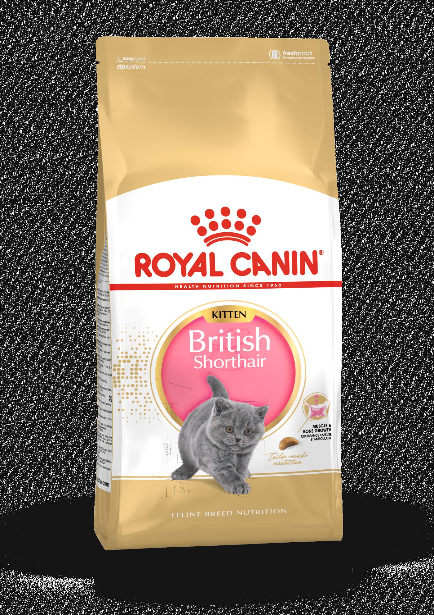British Shorthair Kitten, 10kg