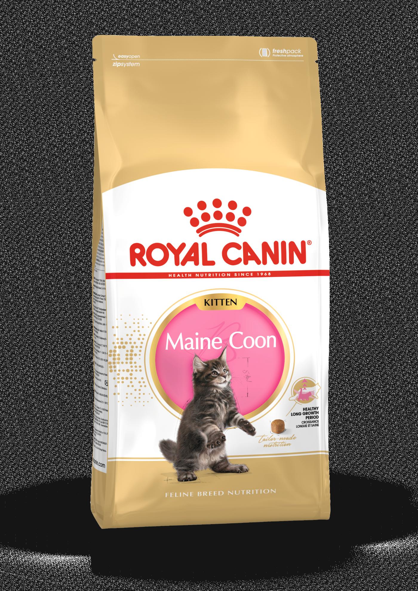 Maine Coon Kitten, 10kg