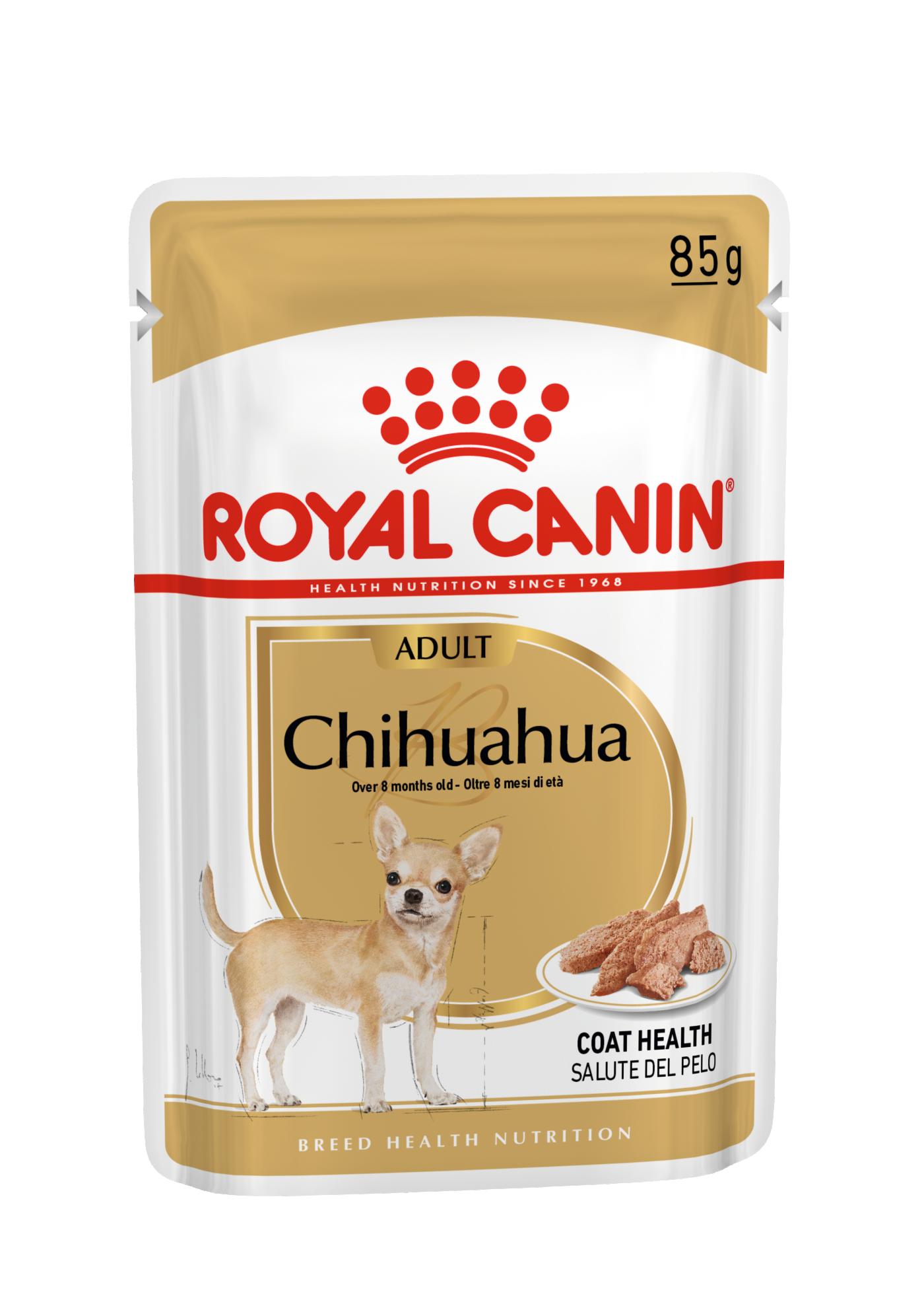Chihuahua, 85g