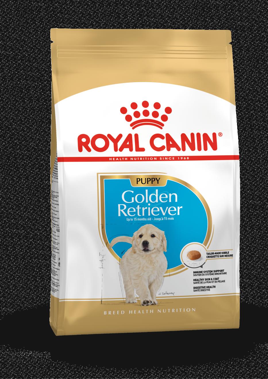 Golden Retriever Puppy, 12kg
